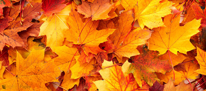 autumn leaves descriptive essay